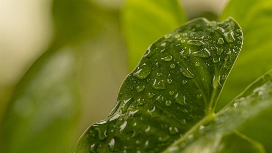 Leaf with raindrop