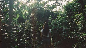 Air Quality Garden - Sheffield Botanical Gardens