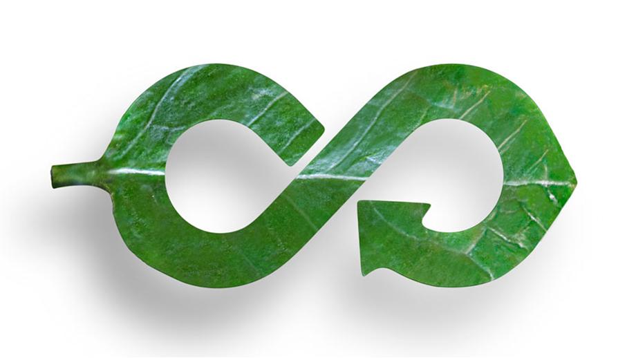leaf in circular sign